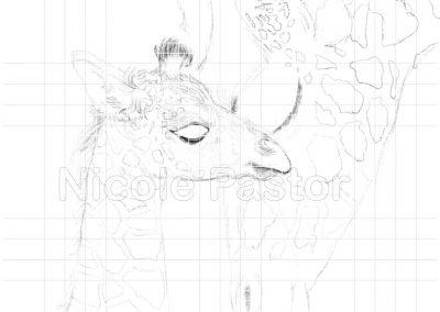 girafe3a